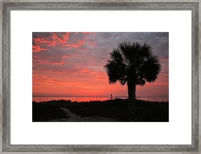 A Single Palm Florida Sunrise Framed Print by JC Findley