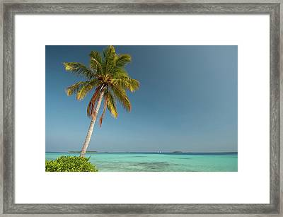 A Single Palm Tree In The Maldives Framed Print