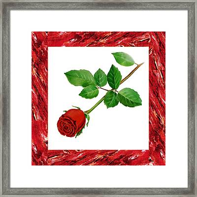 A Single Rose Burgundy Red Framed Print by Irina Sztukowski