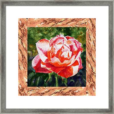 A Single Rose The Morning Beauty Framed Print by Irina Sztukowski
