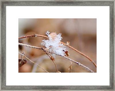 Framed Print featuring the photograph A Single Snowflake by Candice Trimble
