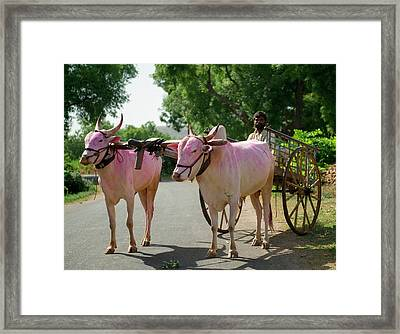 A Slice Of Rural Life In A Village Framed Print