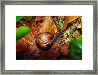 A Slow Snail Framed Print by Jeff Swan
