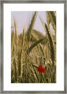 A Small Field In Flanders Framed Print