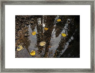 A Small Pool With Aspen Leaves Framed Print
