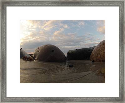 A Snails Tale Framed Print by Eugene Bergeron