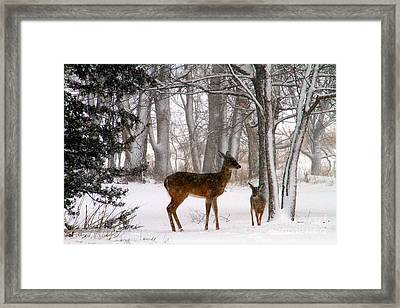 A Snowy Path Framed Print