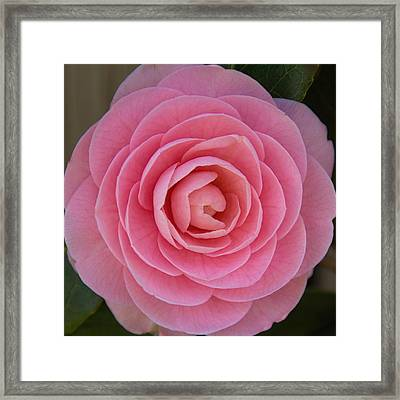 Framed Print featuring the photograph A Soft Blush by Jemmy Archer