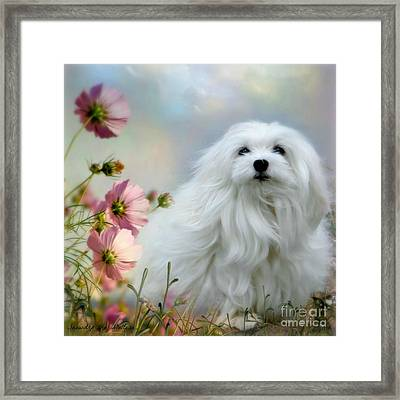 A Soft Summer Breeze Framed Print
