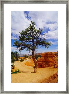 A Sole Tree In Bryce Canyon   Framed Print