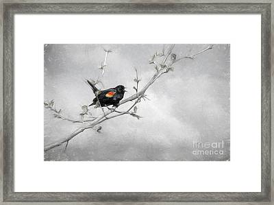 A Song Of Spring Framed Print by Lois Bryan