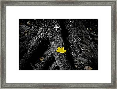 A Spark Of Color Framed Print by Nicklas Gustafsson