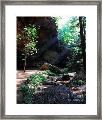A Special Light Framed Print by Mel Steinhauer