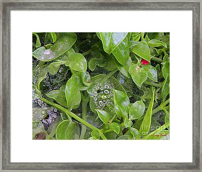 A Spider's Web Framed Print by Kenny Bosak