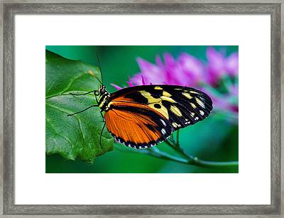 A Splash Of Colour Framed Print