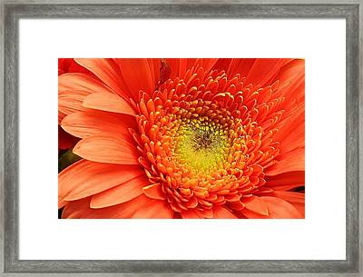 A Splash Of Happiness Framed Print by Bruce Bley