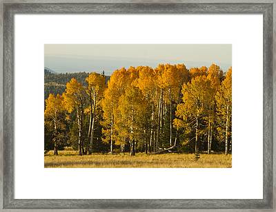 A Splendid Afternoon Framed Print