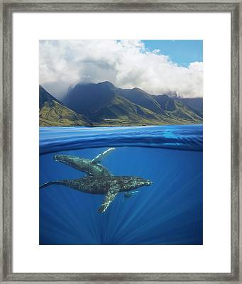 A Split Image Of A Pair Of Humpback Framed Print by Dave Fleetham