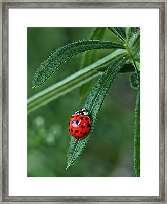 A Spot Of Red Framed Print by JC Findley