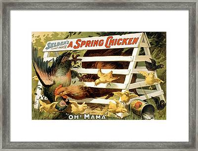 A Spring Chicken Framed Print
