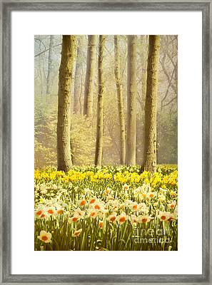 A Spring Day Framed Print by Jasna Buncic