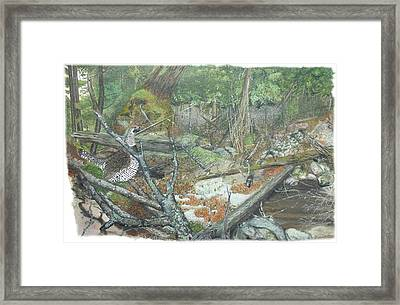 A Spruce Grouse Comes Promenading Framed Print by Tanya  Beyer