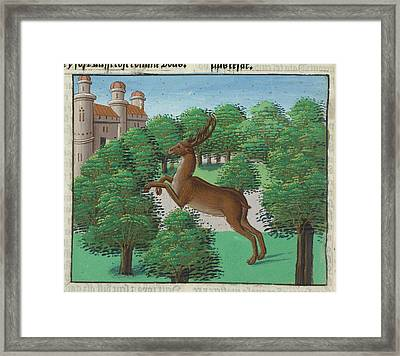 A Stag Framed Print by British Library