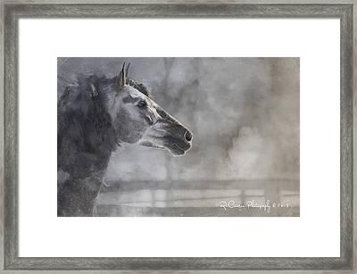 A Stallions Pride Framed Print