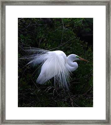 A Stand Out Framed Print