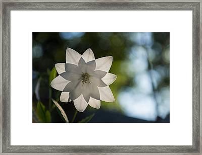 A Star In My Garden Framed Print by Georgia Mizuleva