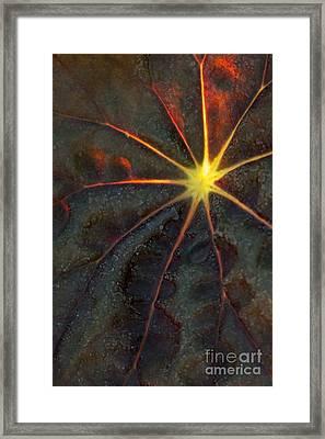 A Star Framed Print by Sabrina L Ryan