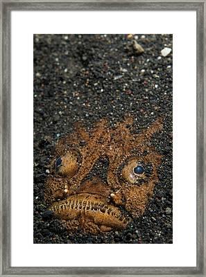 A Stargazer Half Buried In The Sand Framed Print