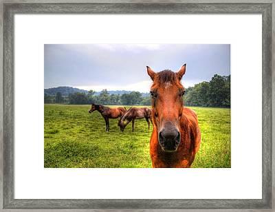 A Starring Horse 2 Framed Print by Jonny D