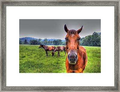 A Starring Horse Framed Print by Jonny D