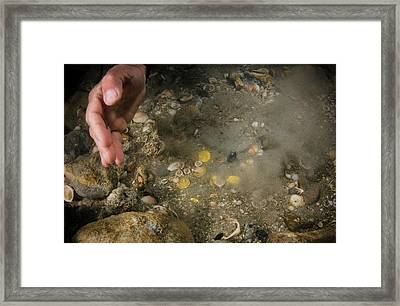 A Stash Of 2000 Ancient Gold Coins Framed Print by Photostock-israel
