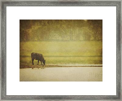 A Steer At A Pond Having A Drink In Red Framed Print by Roberta Murray