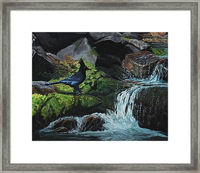 A Stellar Blue Jay Day Framed Print