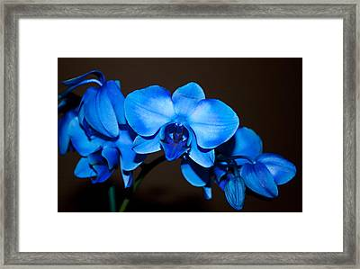 Framed Print featuring the photograph A Stem Of Beautiful Blue Orchids by Sherry Hallemeier