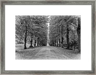 A Straightforward Path Framed Print