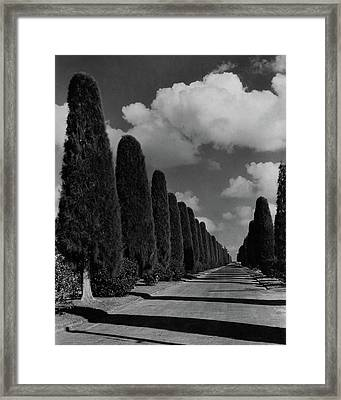A Street Lined With Cypress Trees Framed Print