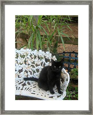 Framed Print featuring the photograph A Study In Contrast 2 by Wendy Coulson