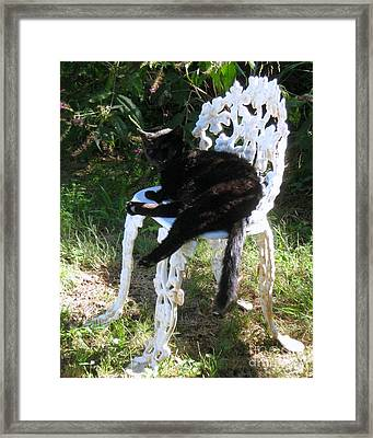 Framed Print featuring the photograph A Study In Contrast by Wendy Coulson