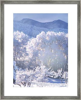 A Study In Frosty Hues Of Winter Whites And Blues Framed Print by Anastasia Savage Ealy