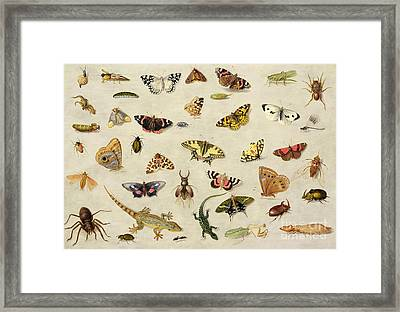 A Study Of Insects Framed Print