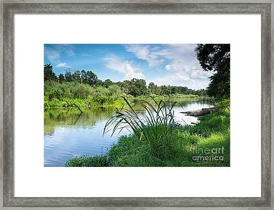 A Summer Day Of Stubblefield Waterplants Framed Print by Ellie Teramoto