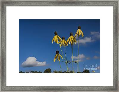 A Summer Daydream... Framed Print