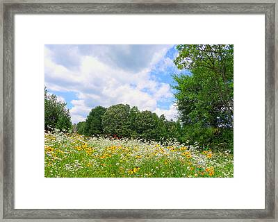 Framed Print featuring the photograph A Summer Meadow by Jim Whalen