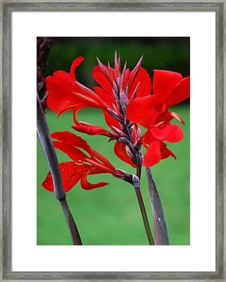 A Summer Red Flower Framed Print by Nancy Stutes