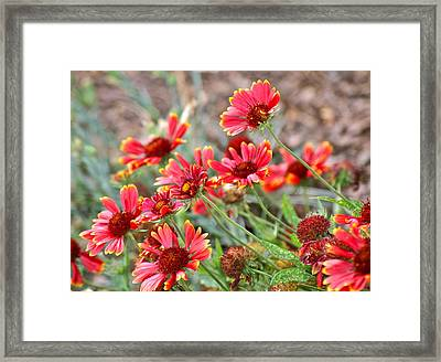 Framed Print featuring the photograph A Summers Breeze by Eve Spring