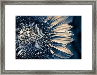 A Sunflower Dream Framed Print by Isabel Laurent
